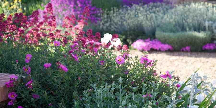Plantas arbustives resistentes a la sequía