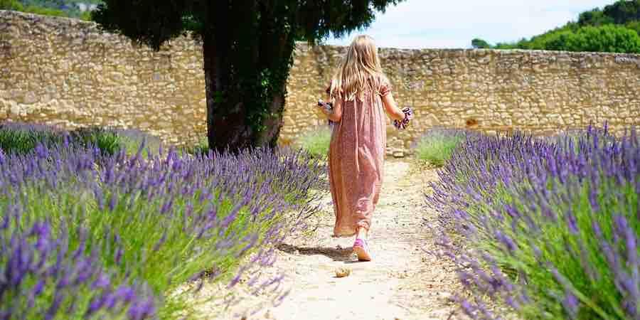 Plantas del mediterraneo. Planta galan de noche cuidados. Arbustos de sombra para jardines pequeños, jardines mediterráneos pequeños, arboles jardin mediterraneo, arbustos mediterráneos para jardines, jardines rústicos mediterráneos , arboles para jardin mediterraneo, jardines estilo mediterraneo, diseño de jardin mediterraneo